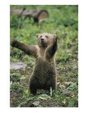 oso bailarín