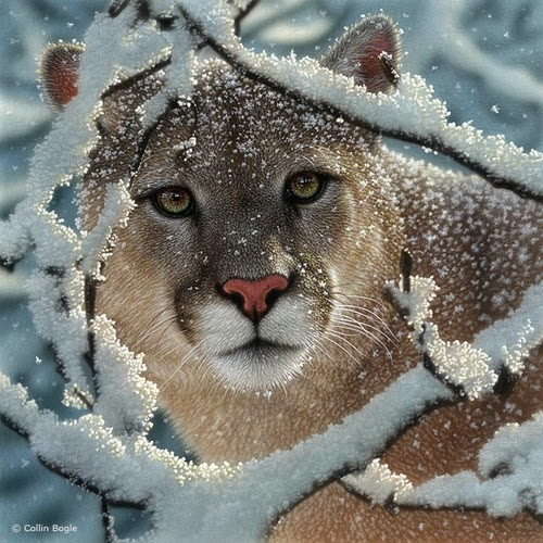 02-Cougar-Collin-Bogle-Animal-Wildlife-in-Art-www-designstack-co
