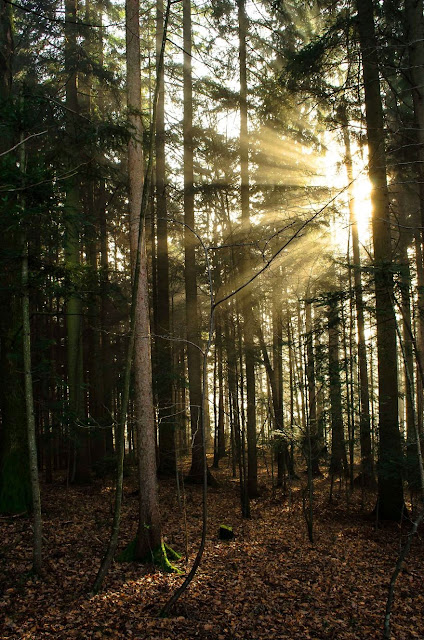 slike šume