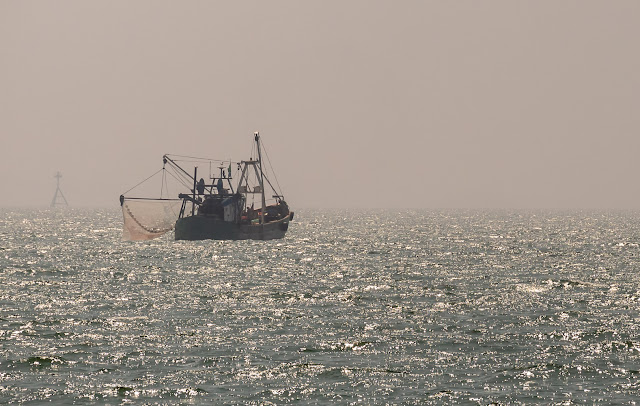 Photo of Winsome trawling for shrimps with one net