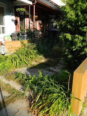 Brockton Village summer garden cleanup before by Paul Jung Gardening Services Toronto