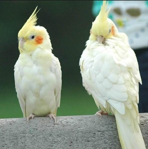 Kisaran Harga Terbaru Vitamin Burung Import Dan Manpaat Untuk Burung Kicau Paling Lengkap