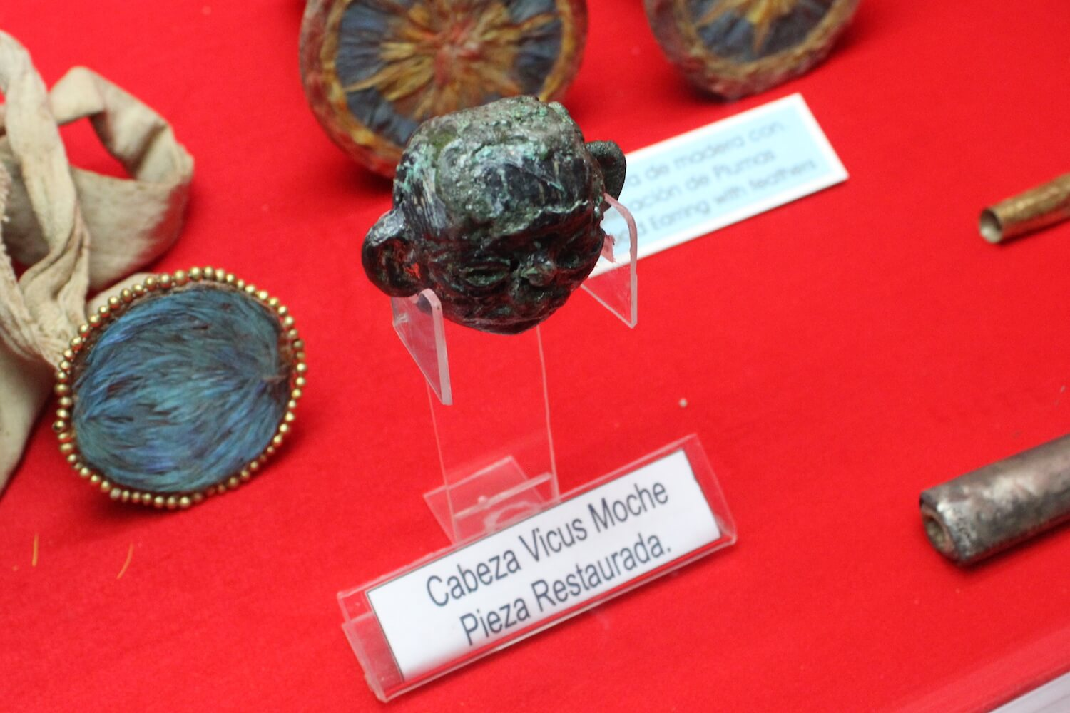 museum of gold shrunken head