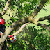 Arborists Clean up after Spring Storms