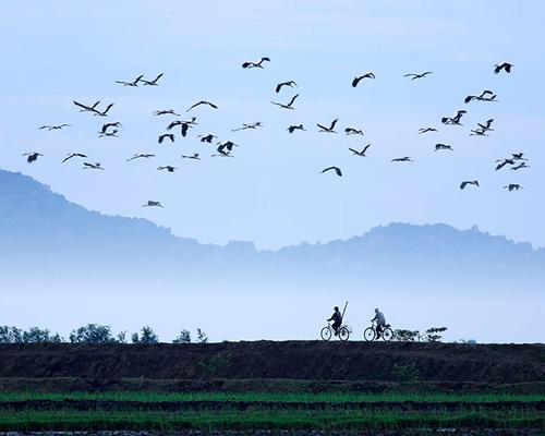Hình ảnh đẹp về làng quê Việt Nam, bờ đê