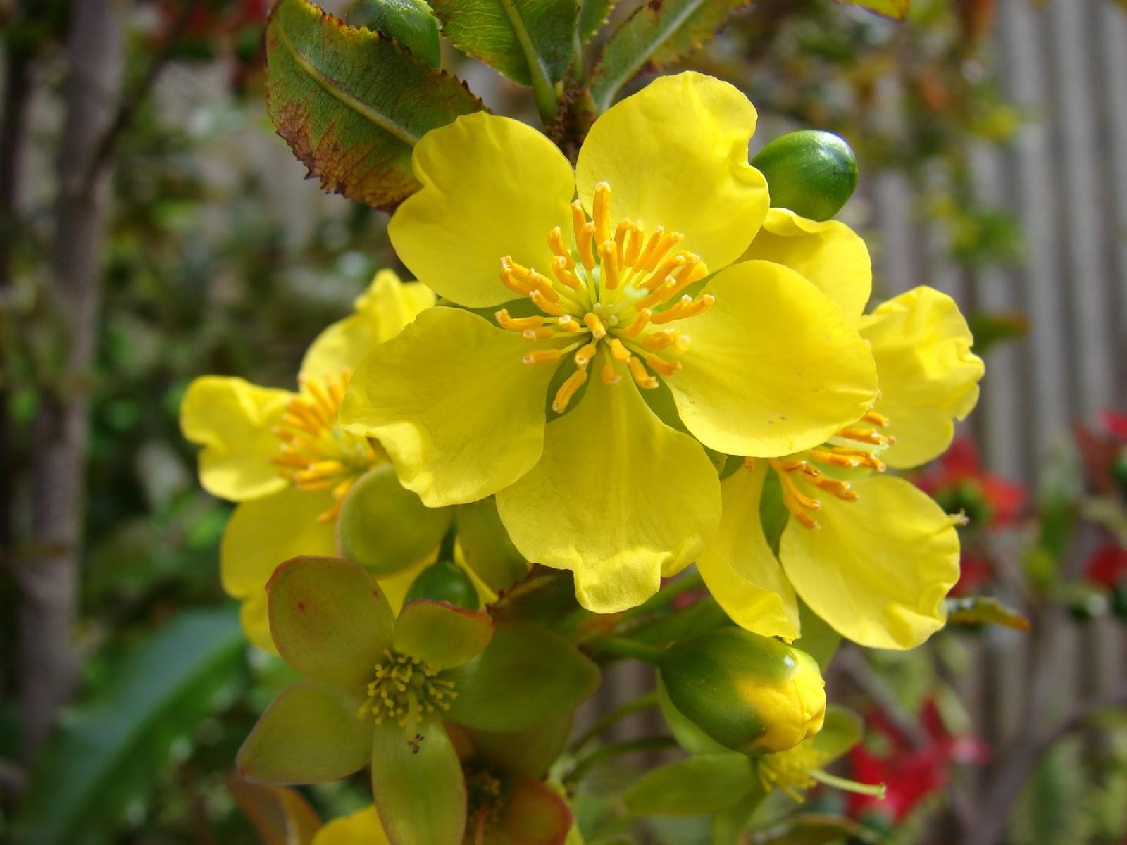 ảnh hoa mai hoa đào