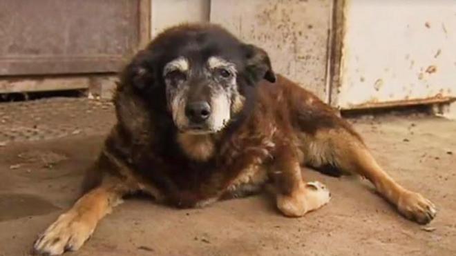 Inilah Anjing Tertua di Dunia, Usianya 147 Tahun