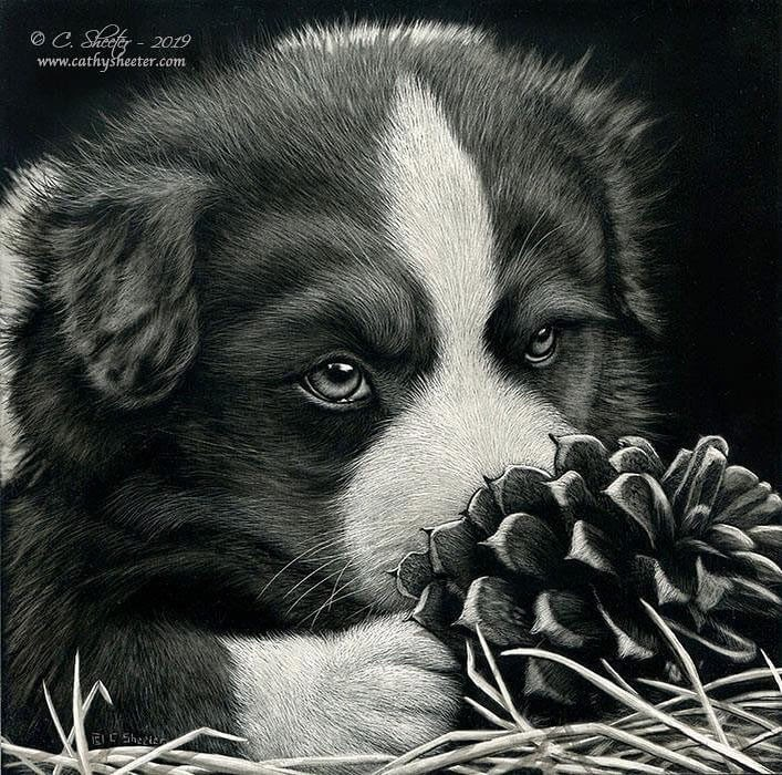 02-Puppy-Cathy-Sheeter-Wildlife-Scratchboard-Drawings-www-designstack-co