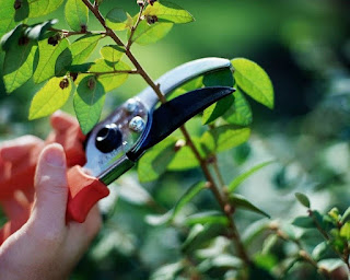 Selective Plant Shaping …  An overview of Pruning and what it means to our gardens and varying plant groups