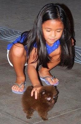 Girl Travel and Teacup Dog