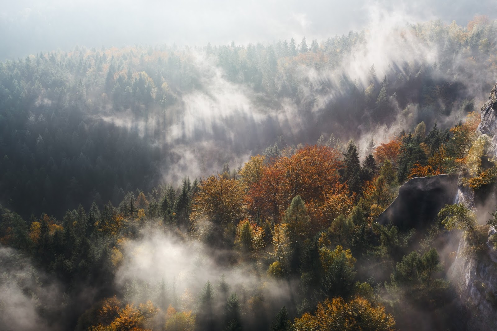Autumn Forest in Fog and Sunlight Wallpaper