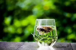 best green tea for quick and easy weight loss