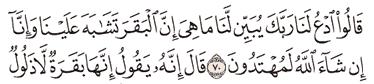 Tafsir Surat Al-Baqarah Ayat 66, 67, 68, 69, 70