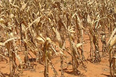 Volume de chuva abaixo do previsto para janeiro já provoca perda agrícola em Elesbão Veloso, diz STTRAF-EV.