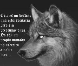 El Poder Del Lobo Solitario La Soledad Buscada