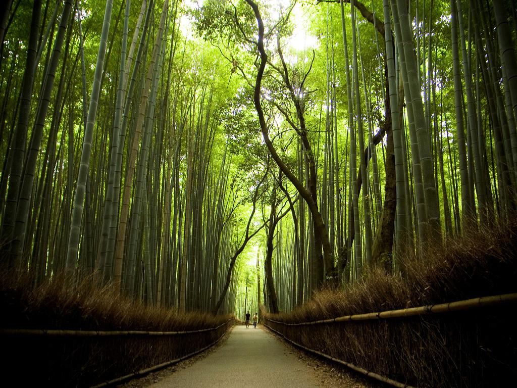 8 Jalan Setapak Paling Indah Di Dunia