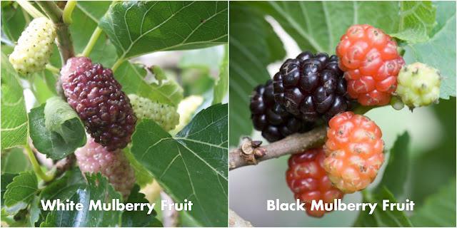 Black_vs_white.jpg