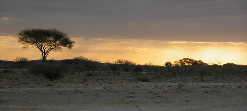 Acacia en Etosha Park