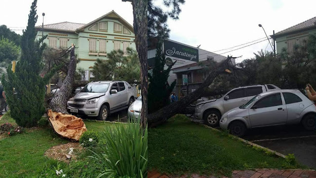 Árvore de 30 metros cai e atinge carros estacionados em Jacutinga(MG)