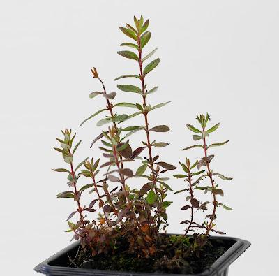VIVEROS TALAIA Planta autóctona Regeneración ecológica 669419144