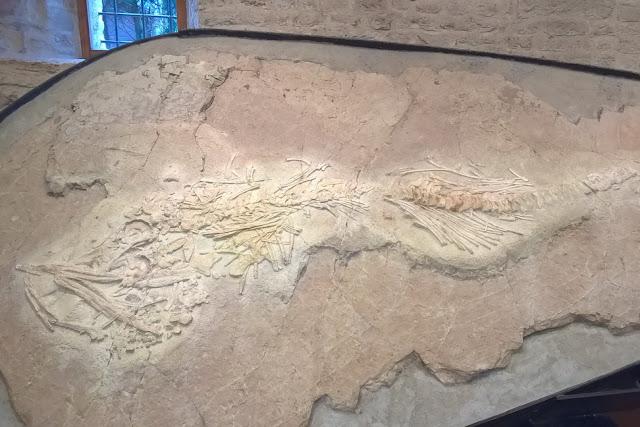 fossili per bambini nelle marche