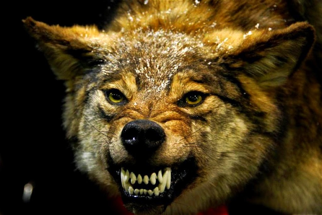 angry werewolf face - photo #30