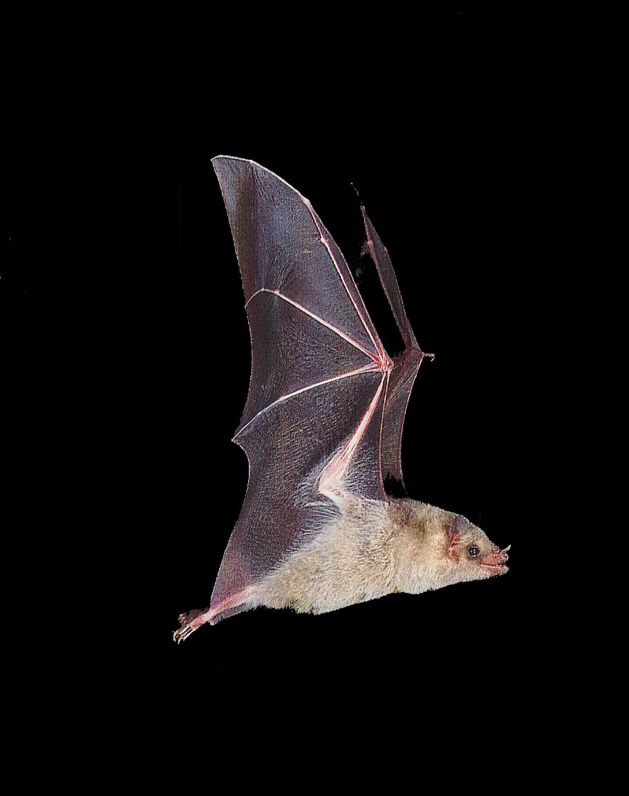 Welcome To Fun2shh World Latest Bat Flying Animal