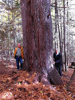 Bob Leverett, Joan Maloof at Grandmother Pine on Broad Brook