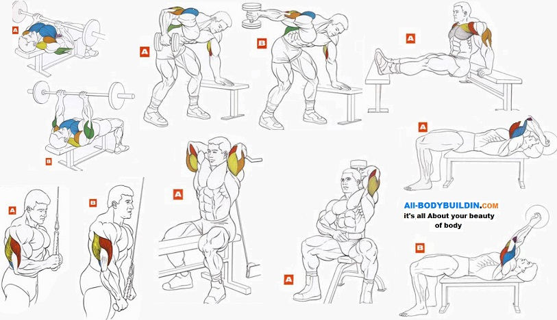 Best Tricep Exercises For Bodybuilding - Easy Fitness Tips
