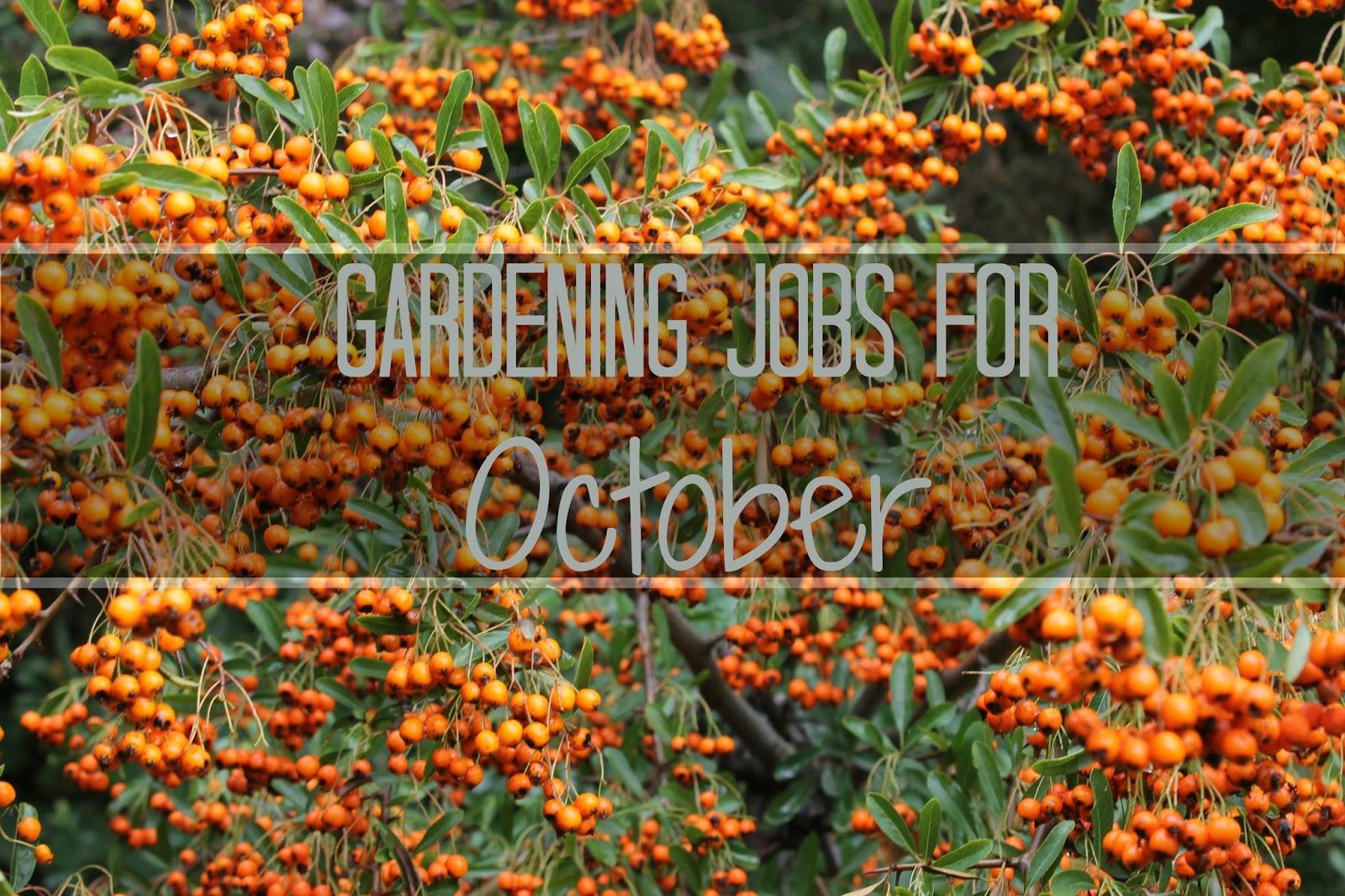 JibberJabberUK: Gardening jobs for October