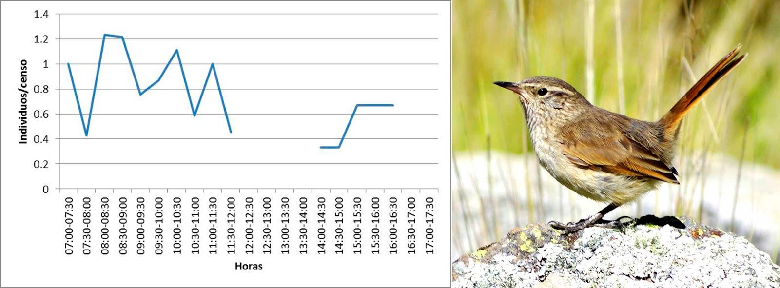 Patrones de actividad diaria de las aves en la zona altoandina ...