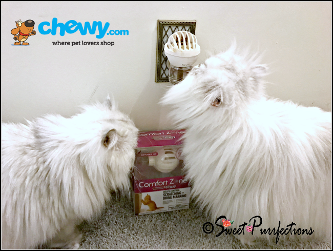 Truffle and Brulee sniffing the Comfort Zone with Feliway diffuser