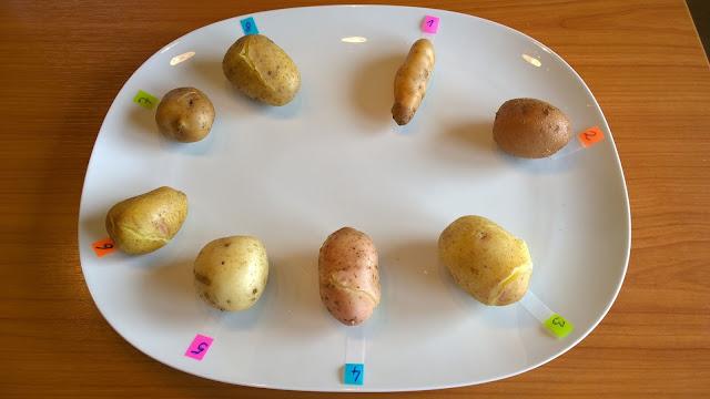 die Test-Kartoffelsorten gekocht (c) by Joachim Wenk