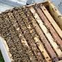 Ouverture de ruche