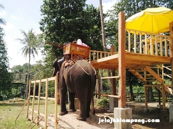gajah taman satwa lembah hijau