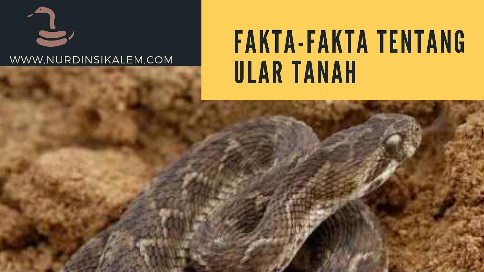 Gambar ular tanah