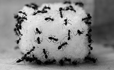 Cara Mudah Usir Semut Didapur Dan Mencegahnya Datang Kembali
