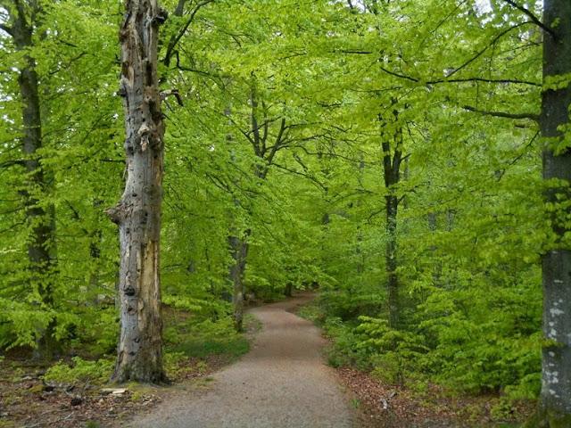 Il verde di maggio