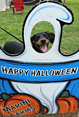 dog smiling through Halloween ghost cut-out