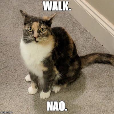 Walk the Cat Meme | Lazy Daisy Felines