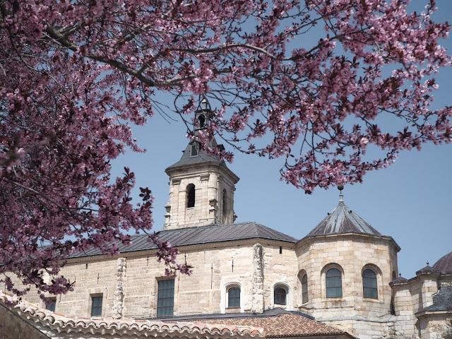 Monasterio de El Paular con árbol de flores rosas