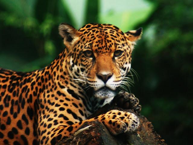 Mais de 20 milhões de espécies foram mortas na Amazônia no séc. XX