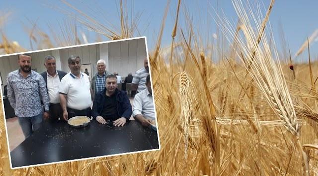 Hasat sezonunun ilk buğdayı satıldı