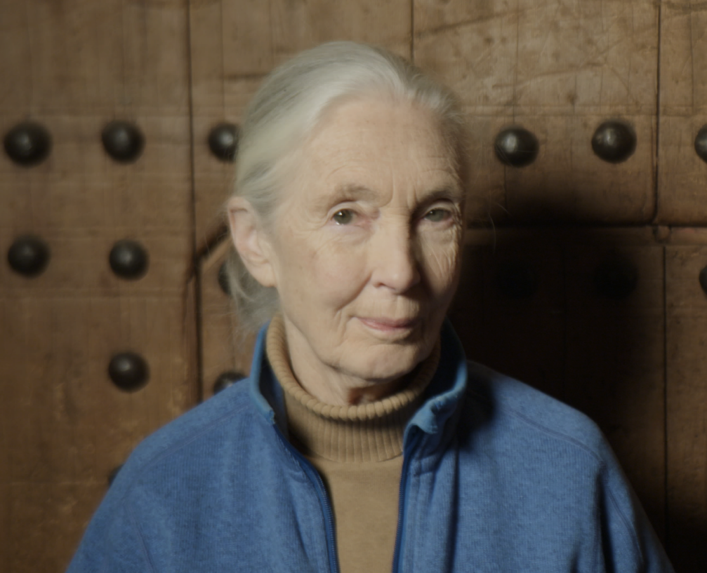 CNN's 'Inside Africa' explores the impact and evolution of Jane Goodall's conservation career in Africa
