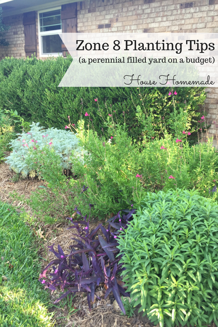 Gardening tips for planting with perennials. (zone 8)