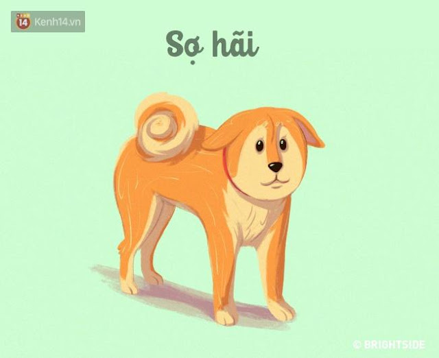 16 bí kíp nhìn ngôn ngữ cơ thể chó cưng, đoán suy nghĩ