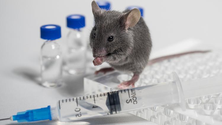 Tests sur les animaux : à qui faire confiance ?