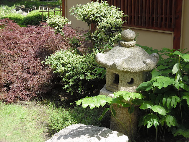 kamienna latarnia i klon japoński w ogrodzie japońskim