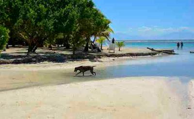 Beach near East Harbour Utila