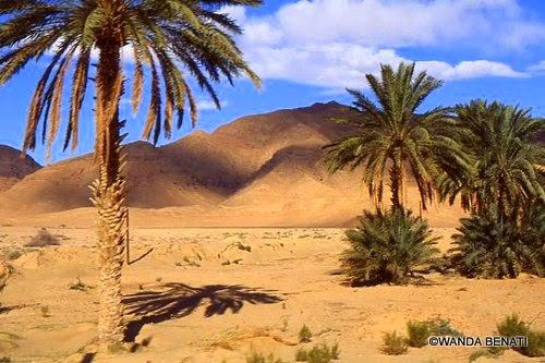 Paesaggio nel deserto algerino